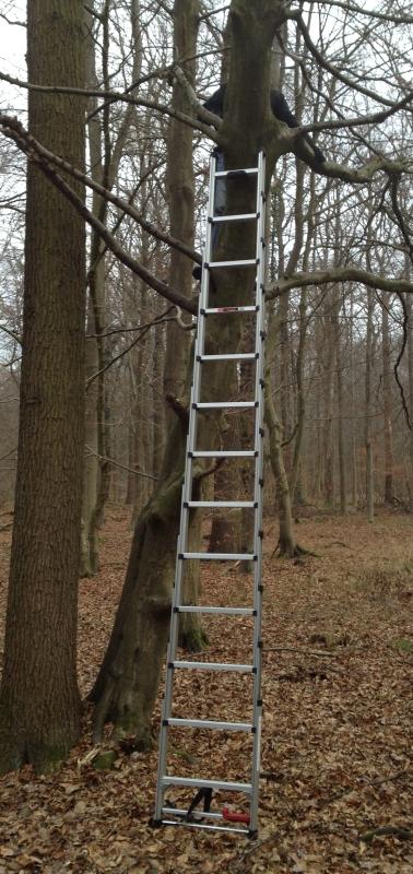 Die neue Leiter