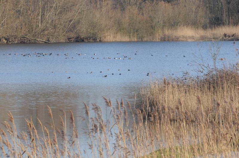 Wasservögel im Naturschutzgebiet