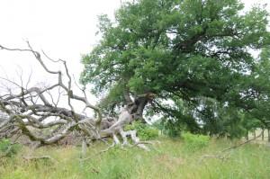Ein markanter Baum