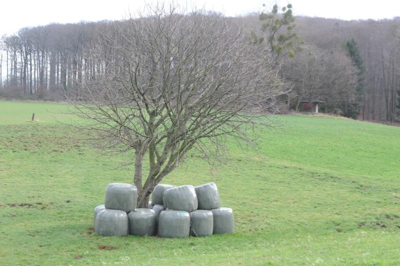 gut geschützter Baum